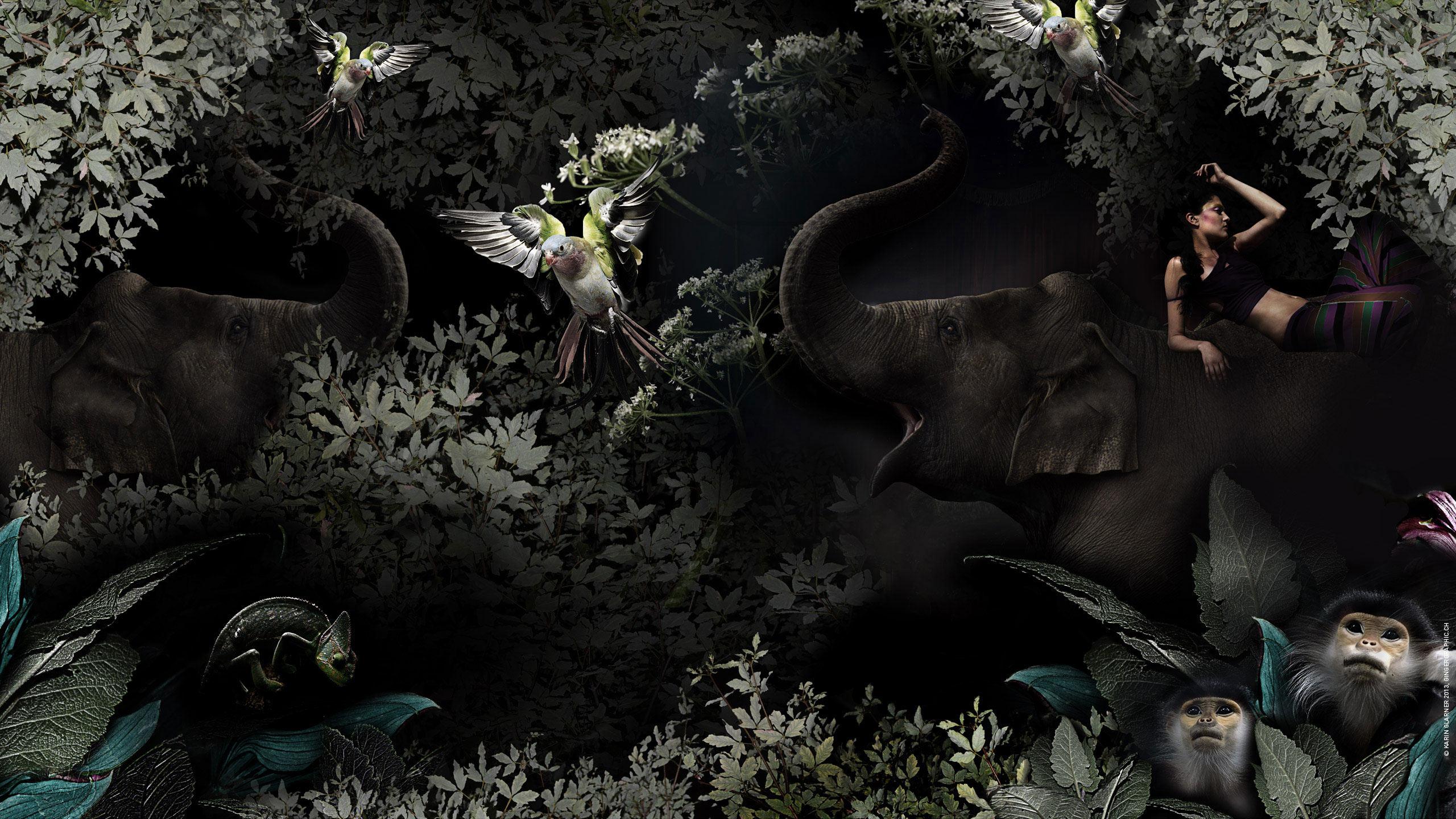 a22_elefant_ginger_copyrightkglarner_
